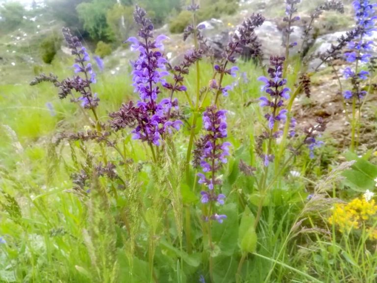 Sortie découverte plantes médicinales LYON