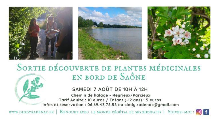 Sortie découverte de plantes médicinales